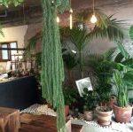 韓国ソウルの植物溢れる大人のカフェBotanique(ボタニーク)
