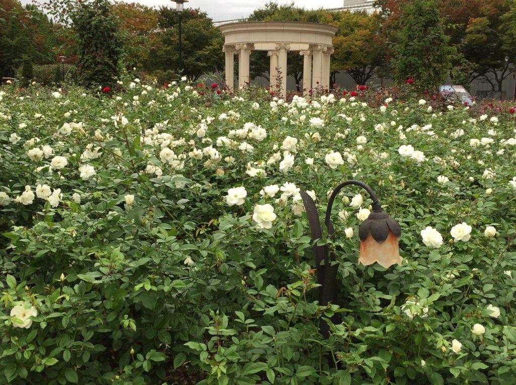 オリンピック公園のトゥルコッマル、들꽃마루とバラ園